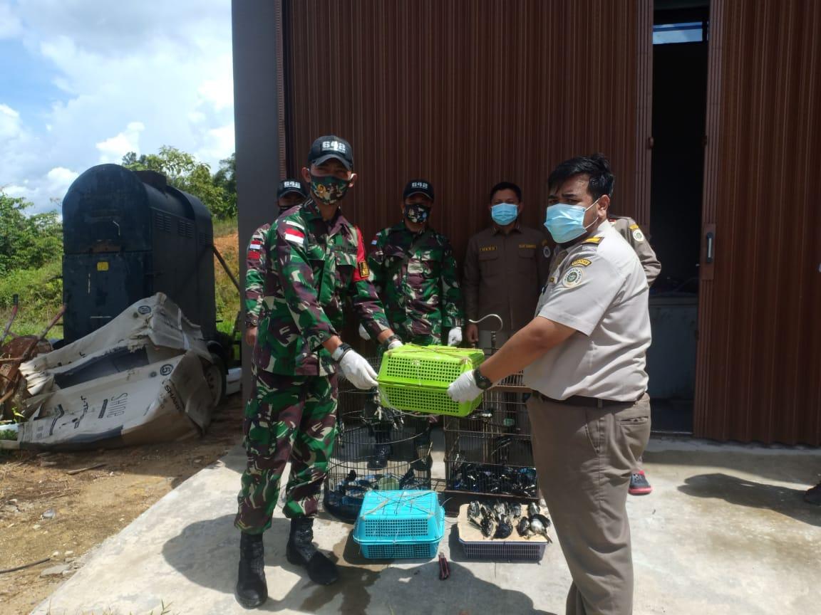 50 Ekor Burung Kacer Pilihan Gagal Diseludupkan Ke Malaysia