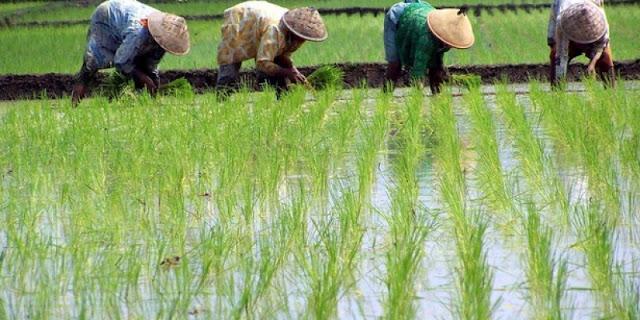 7 Keutamaan Bertani Dalam Islam