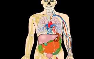 Individual Universities' JAMB UTME Subjects Combination for Anatomy
