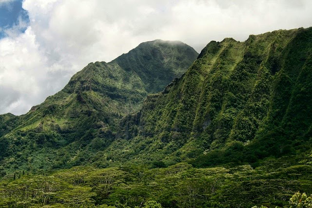 scenery of a forest on Hawaii Mountain