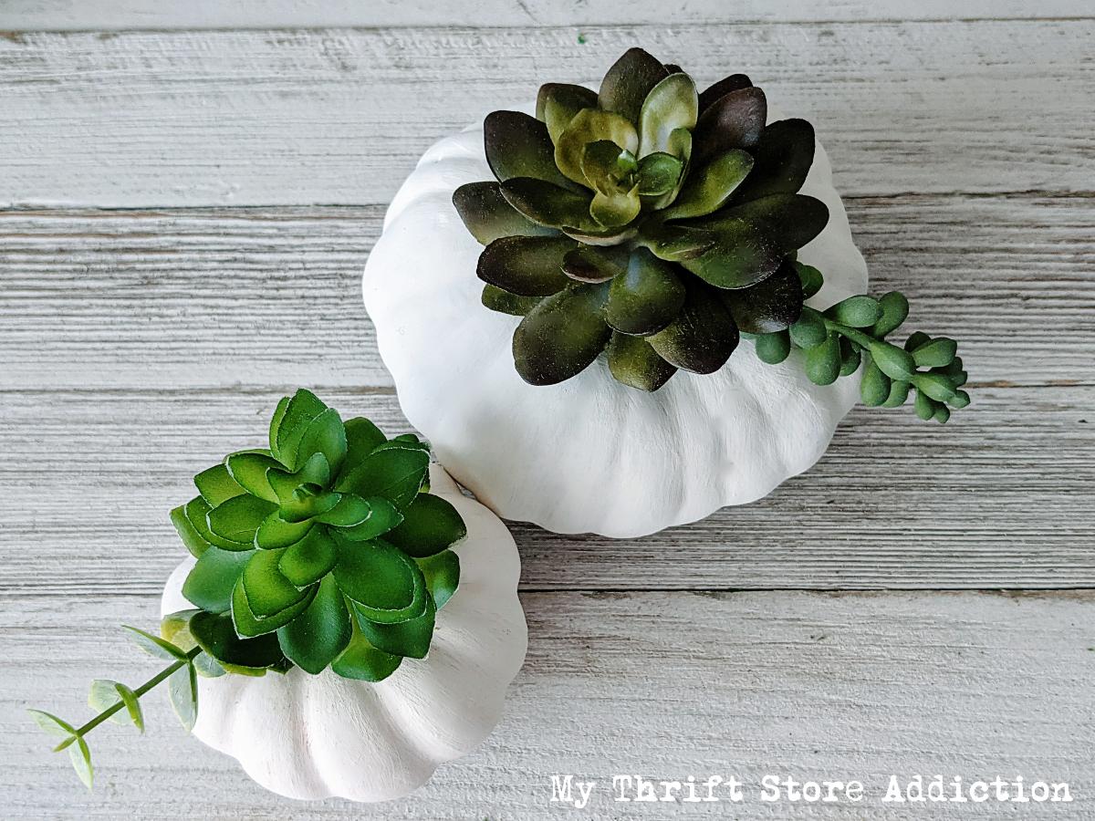 DIY succulent pumpkins
