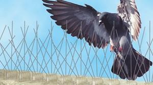 Controle e remoção de Pombos com gaiolas