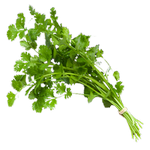 coriander in spanish