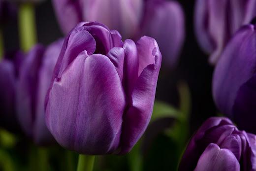 صور زهور ورق حائط 12