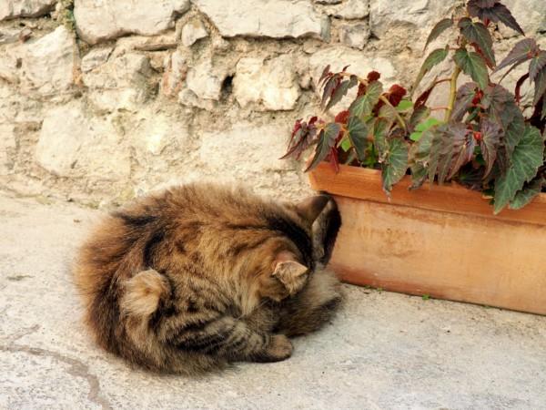 Porto Venere kittens