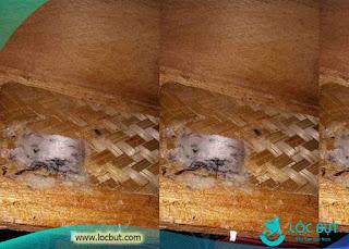 Chim yến làm trên thanh đan nong mốt bằng tre.