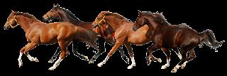 horse-png-cavalos-sem-fundo-vetarq-influenza-equina-virus-olimpiadas-rio-janeiro-brazil