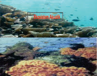 Macam-macam serta ciri-ciri Ekosistem Perairan (Akuatik)