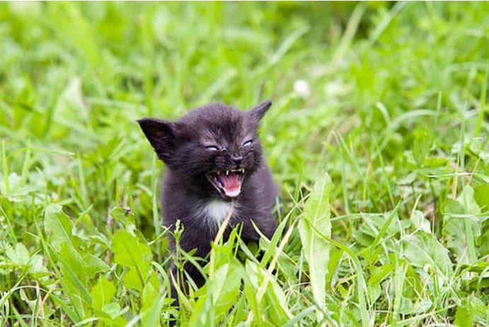 10 Gambar Ini Jadi Bukti Kalau Monster Kecil Ini Nggak Kalah Seram Ketika Mereka Marah!
