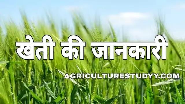 खेती किसे कहते है इसकी परिभाषा एवं खेती के प्रकार पूरी जानकारी हिंदी में, kheti bari in hindi, farming in hindi, kheti in hindi, agriculture in hindi,