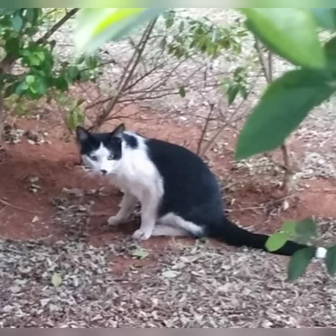 A coisa ta Feia:Gato pula no tanque de batismo de uma igreja Gato pula no tanque de batismo de uma igreja e vídeo viraliza nas redes sociais