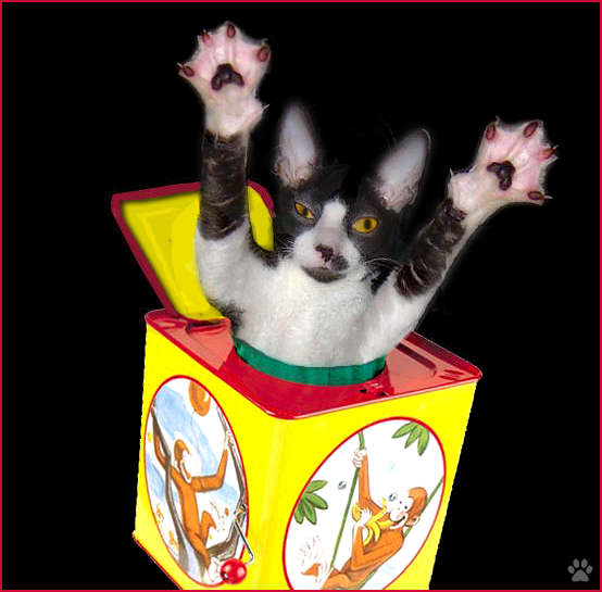 """Photoshopped Cat picture • Funny kitty playing Peek-aboo in its magic box! """"Surprise, It's me!"""""""