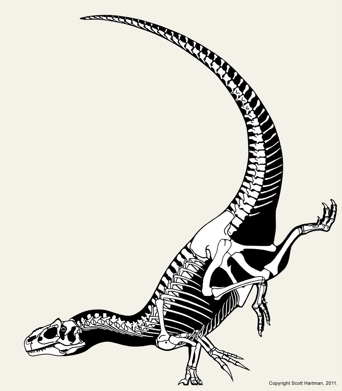 hight resolution of skeletal poses do they matter