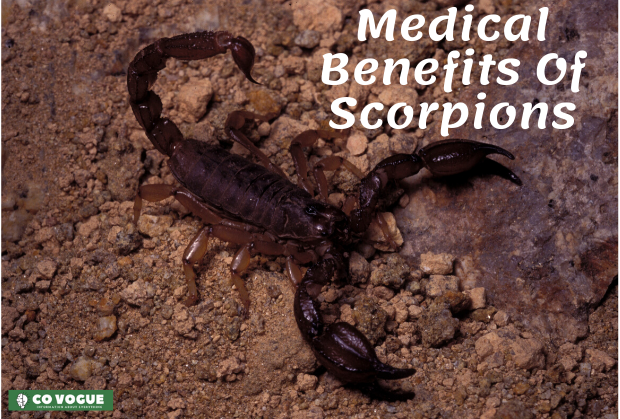 medical benefits of scorpions
