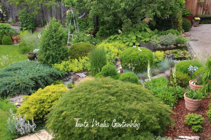 Hanggarten mit Gartenteich Buchs Frauenmantel Ahorn Schaublatt