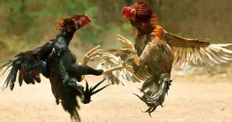 Οι αλλοδαποί σφάζονται μεταξύ τους «σαν τα κοτόπουλα» στη μέση του δρόμου: Νέο μαχαίρωμα στον Πειραιά