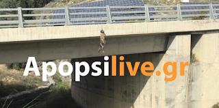 Κτηνωδία στην Κρήτη: Κρέμασαν σκύλο στη γέφυρα του δρόμου Μεσαρά-Ηράκλειο