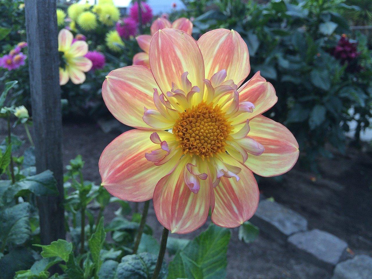 flor amarela com laranja em um parque americana