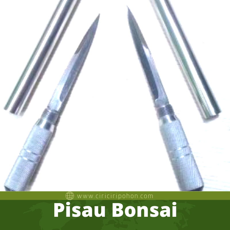 Pisau Bonsai