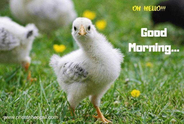 good-morning-photos-baby