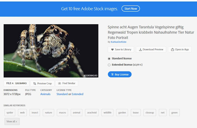 Spinne acht Augen Tarantula Vogelspinne giftig Regenwald Tropen krabbeln Nahaufnahme Tier Natur Foto Portrait