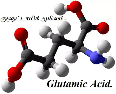 Glutamic Acid