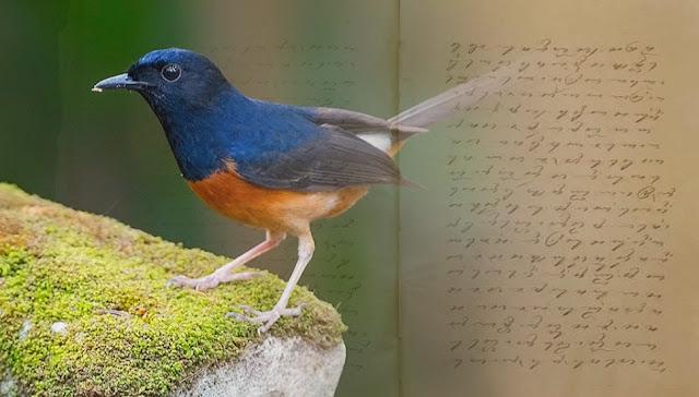Penemuan Naskah Kuno Tentang Tata Cara Memelihara Burung Di Cirebon