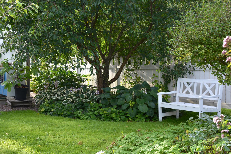 kuunliljat-puutarhassa