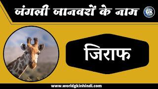 Giraffe Animal Name In Hindi