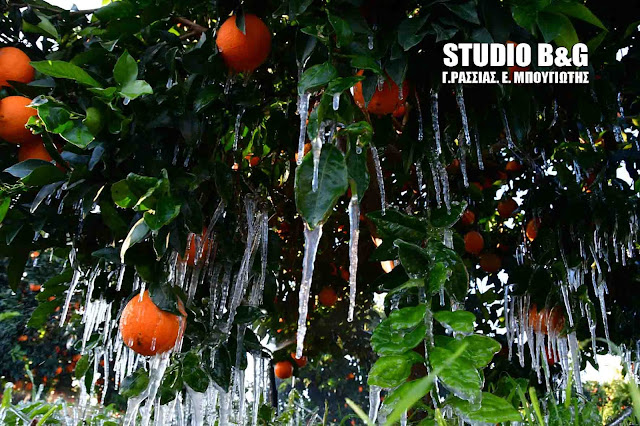 Επαναλαμβανόμενοι παγετοί στην Αργολίδα - Στην κατάψυξη ο κάμπος - Δυσεύρετα τα ντόπια κηπευτικά