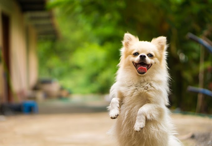 How To Keep Your Dog Happy, 10 Best Relationship Tips You Should Follow