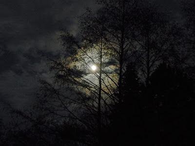 La Luna en el bosque