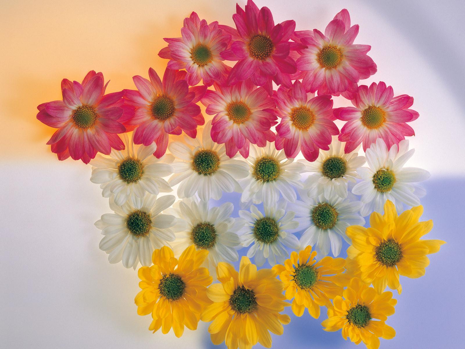 flowers for flower lovers.: Flowers wallpapers HD desktop