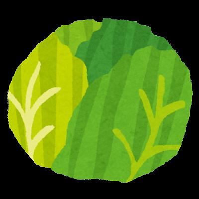 キャベツのイラスト(野菜)