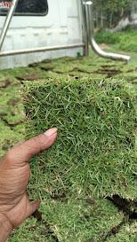 Info harga rumput taman terbaru