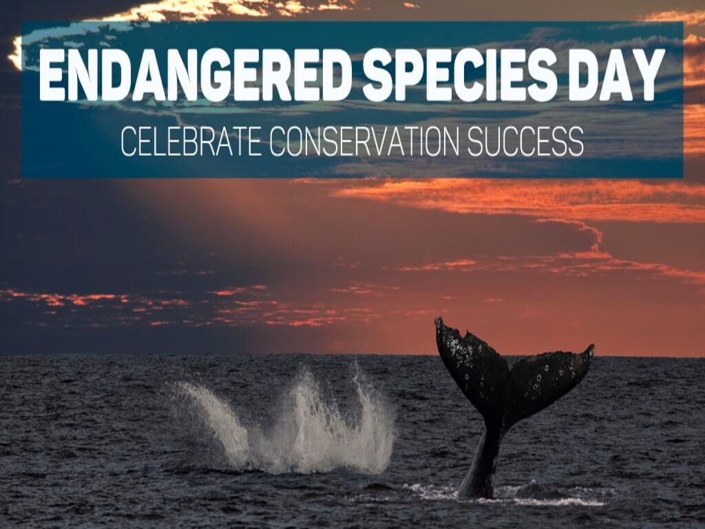 Hari Spesies Terancam