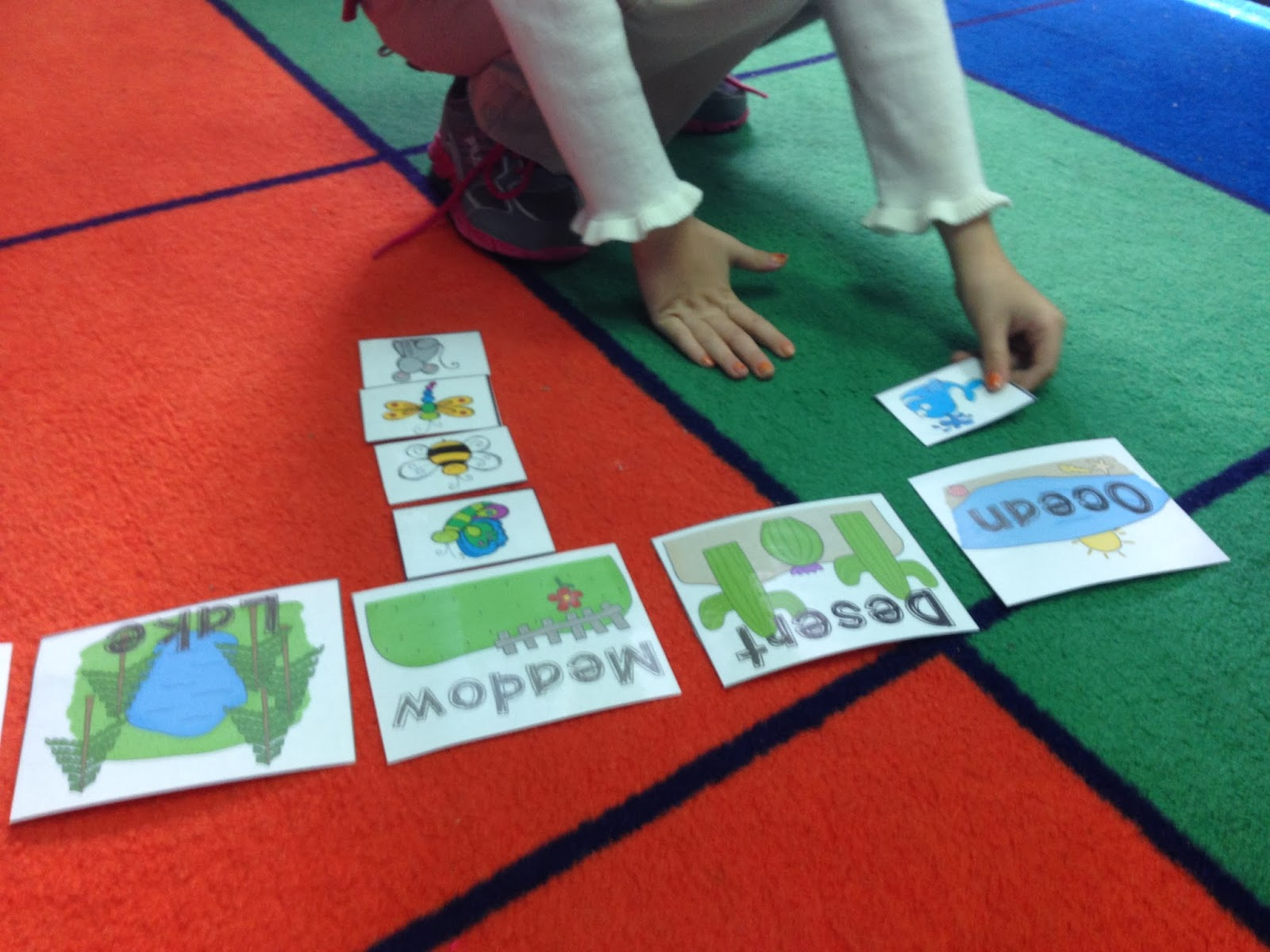 The Adventures Of A K 1 Teacher Habitats Amp Food Chains