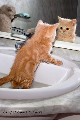 Kitten taking bath