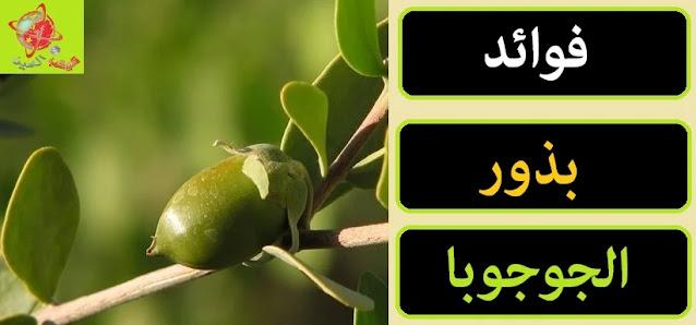 """"""""""",""""زراعة الجوجوبا"""","""""""","""""""","""""""","""""""","""""""","""""""","""""""" """""""",""""زراعة الجوجوبا في المنزل"""","""""""","""""""","""""""","""""""","""""""","""""""","""""""" """""""",""""زراعة الجوجوبا فى مصر"""","""""""","""""""","""""""","""""""","""""""","""""""","""""""" """""""",""""زراعة الجوجوبا pdf"""","""""""","""""""","""""""","""""""","""""""","""""""","""""""" """""""",""""زراعة الجوجوبا في إسرائيل"""","""""""","""""""","""""""","""""""","""""""","""""""","""""""" """""""",""""زراعة الجوجوبا في المغرة"""","""""""","""""""","""""""","""""""","""""""","""""""","""""""" """""""",""""زراعة الجوجوبا في العالمين"""","""""""","""""""","""""""","""""""","""""""","""""""","""""""" """""""",""""زراعة الجوجوبا في تونس"""","""""""","""""""","""""""","""""""","""""""","""""""","""""""" """""""",""""زراعة الجوجوبا في السودان"""","""""""","""""""","""""""","""""""","""""""","""""""","""""""" """""""",""""زراعة نبات الجوجوبا"""","""""""","""""""","""""""","""""""","""""""","""""""","""""""" """""""",""""ميعاد زراعة الجوجوبا فى مصر"""","""""""","""""""","""""""","""""""","""""""","""""""","""""""" """""""",""""مشاكل زراعة الجوجوبا فى مصر"""","""""""","""""""","""""""","""""""","""""""","""""""","""""""" """""""",""""شركات زراعة الجوجوبا فى مصر"""","""""""","""""""","""""""","""""""","""""""","""""""","""""""" """""""",""""زراعة نبات الجوجوبا فى مصر"""","""""""","""""""","""""""","""""""","""""""","""""""","""""""" """""""",""""زراعة الجوجوبا مصر"""","""""""","""""""","""""""","""""""","""""""","""""""","""""""" """""""",""""دراسة جدوى زراعة الجوجوبا فى مصر"""","""""""","""""""","""""""","""""""","""""""","""""""","""""""" """""""",""""زراعة جوجوبا في مصر"""","""""""","""""""","""""""","""""""","""""""","""""""","""""""" """""""",""""مشاكل زراعة الجوجوبا في مصر"""","""""""","""""""","""""""","""""""","""""""","""""""","""""""" """""""",""""زراعة الجوجوبا في المغرب"""","""""""","""""""","""""""","""""""","""""""","""""""","""""""" """""""",""""جدوى زراعة الجوجوبا"""","""""""","""""""","""""""","""""""","""""""","""""""","""""""" """""""",""""اماكن زراعة الجوجوبا في مصر"""","""""""","""""""","""""""","""""""","""""""","""""""","""""""" """""""",""""اشجار الجوجوبا في مصر"""","""""""","""""""","""""""","""""""","""""""","""""""","""""""""""