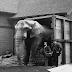 जम्बों हाथी की कहानी सुनकर आप भी रोने लगेंगे | Sad Story of JUMBO Circus Elephant in Hindi