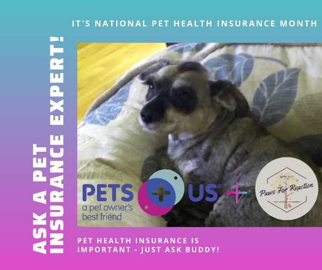 Paws For Reaction interviews pet insurance expert from Pets Plus Us  #NationalPetInsuranceMonth