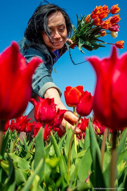 Tulipany w Cedrach Wielkich