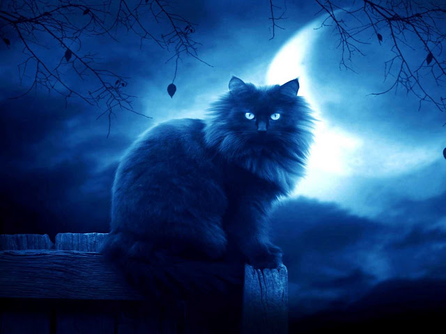 صور قطط جميلة hd اجمل صور القطط في العالم 2020