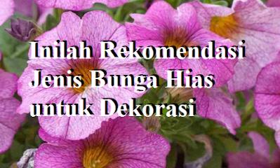 Inilah Rekomendasi Jenis Bunga Hias untuk Dekorasi