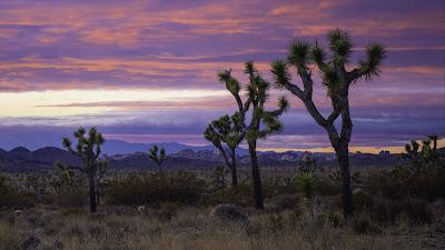Sunset, desert, trees, bushes, mountains
