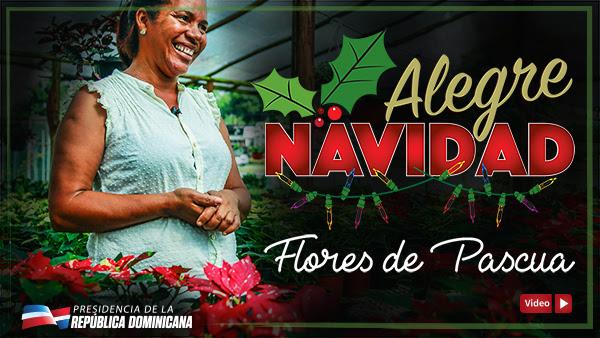 VIDEO: Alegre Navidad - Flores de Pascua