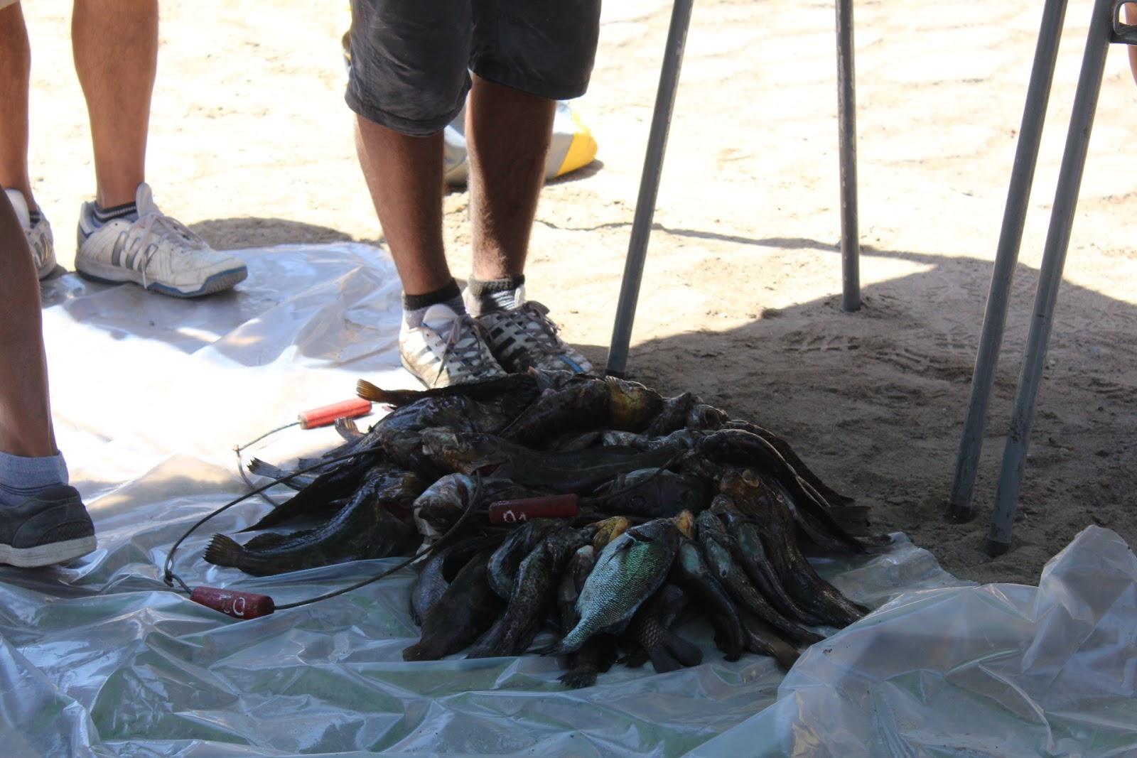 Deportes marinos en antofagasta zonal de pesca for Vivero antofagasta