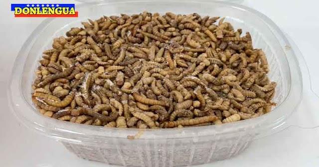 Comunidad Europea autoriza el consumo de gusanos para alimentarse