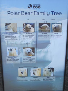 Toronto Zoo's Polar Bear Family.