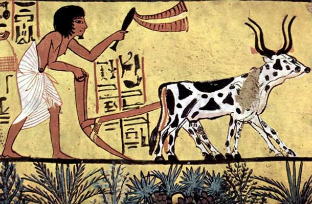 Why Are There 365 Days in a Year? Organizing Dates with an Ancient Egyptian Calendar Plowing-farmer